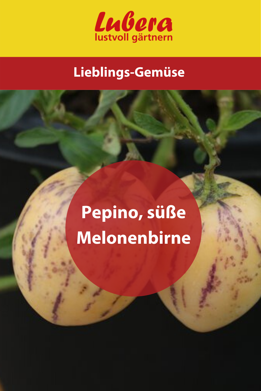 Pepino Lubera De In 2020 Melonenbirne Melone Birne