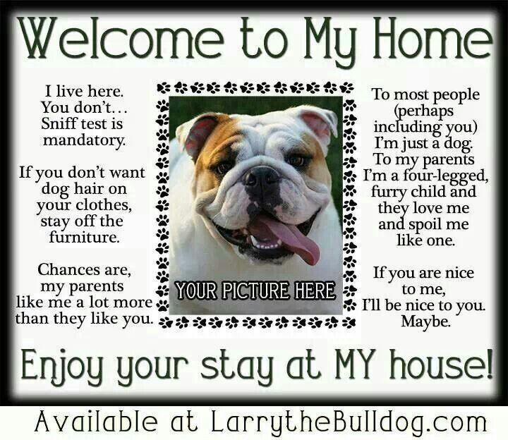 Pin By Heather Jolly On Bulldog Stuff English Bulldog Funny