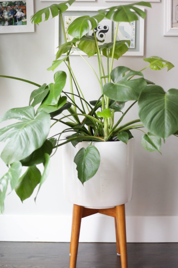 Monstera Plant Care -   14 planting Stand houseplant ideas