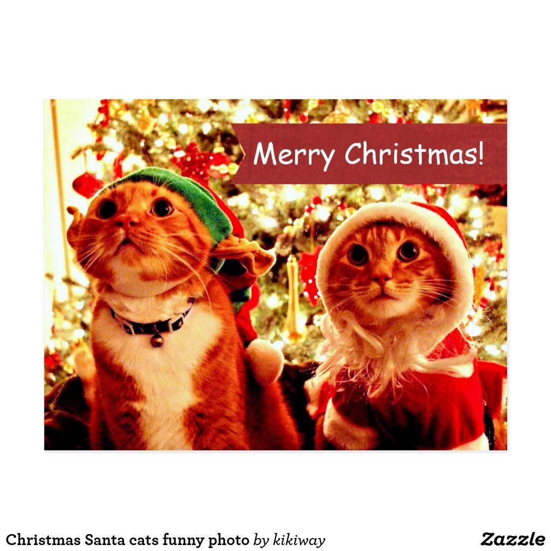 Christmas Santa cats funny photo Holiday Postcard   Zazzle.com