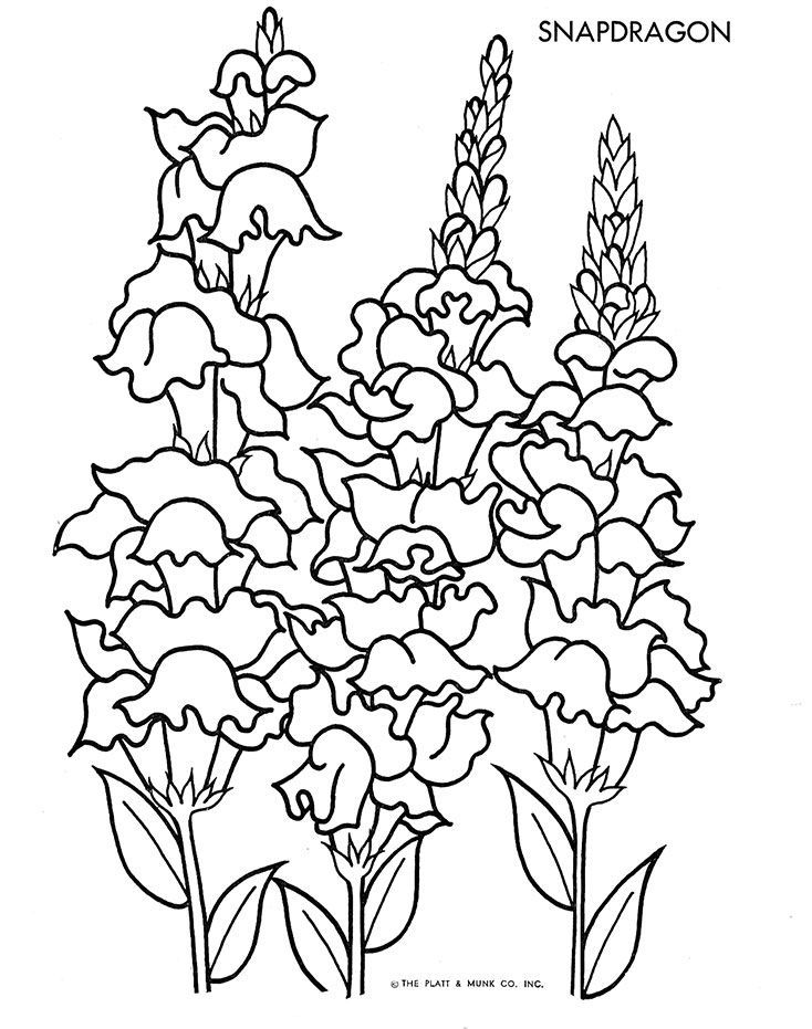Snapdragon  SIP1  Pinterest  Journal ideas Adult coloring and
