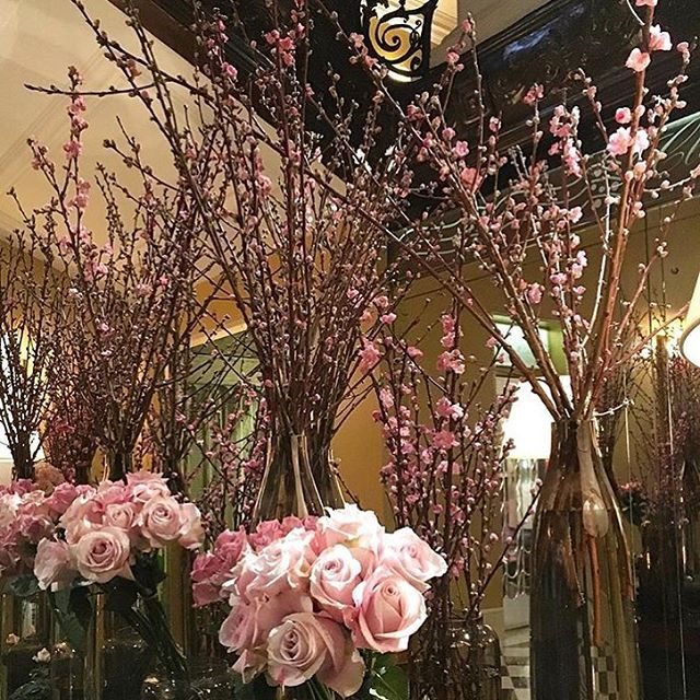 Blossom and roses always a winning combination thank you @chakolondon #springflowers #claridges