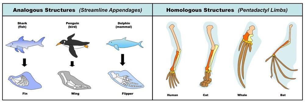 Analogous Vs Homologous Evolution Biology Fun Science
