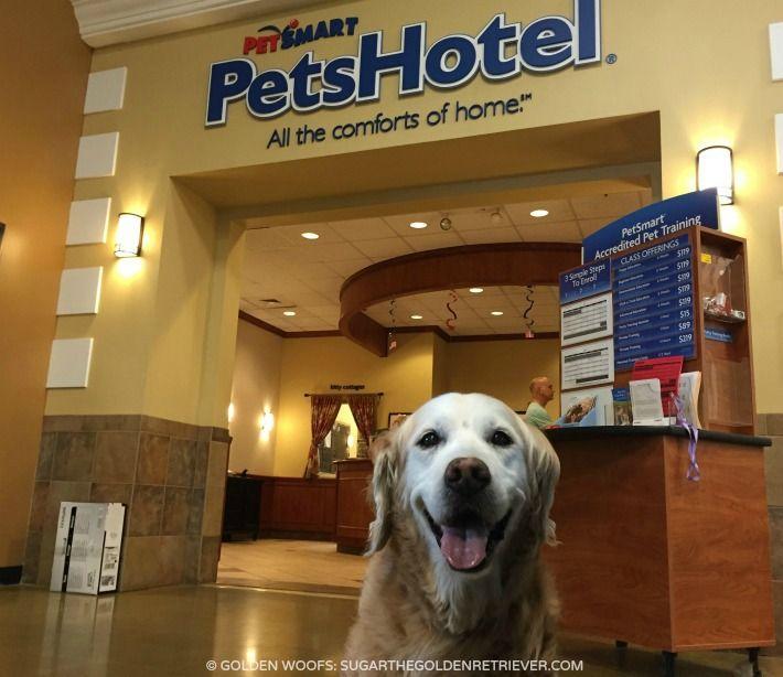 Celebrate National Ice Cream Day At Petsmart S Petshotel Sugar The Golden Retriever Petsmart Pet Training Dog Safe