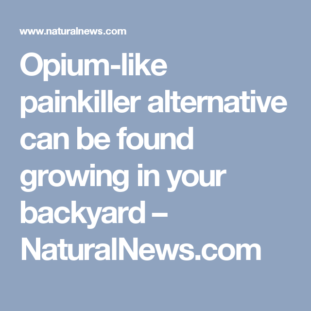 Opium-like painkiller alternative can be found growing in your backyard – NaturalNews.com