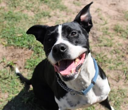 Caesar Is An Adoptable Dog Labrador Retriever Mix Searching For A Forever Family Near Inverness Fl U Labrador Retriever Dog Adoption Labrador Retriever Mix