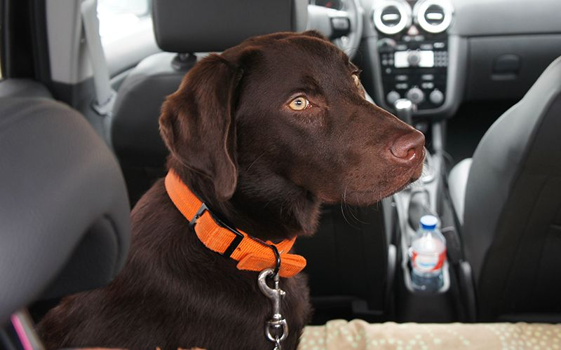 Best Dog Seat Belt And Car Harness