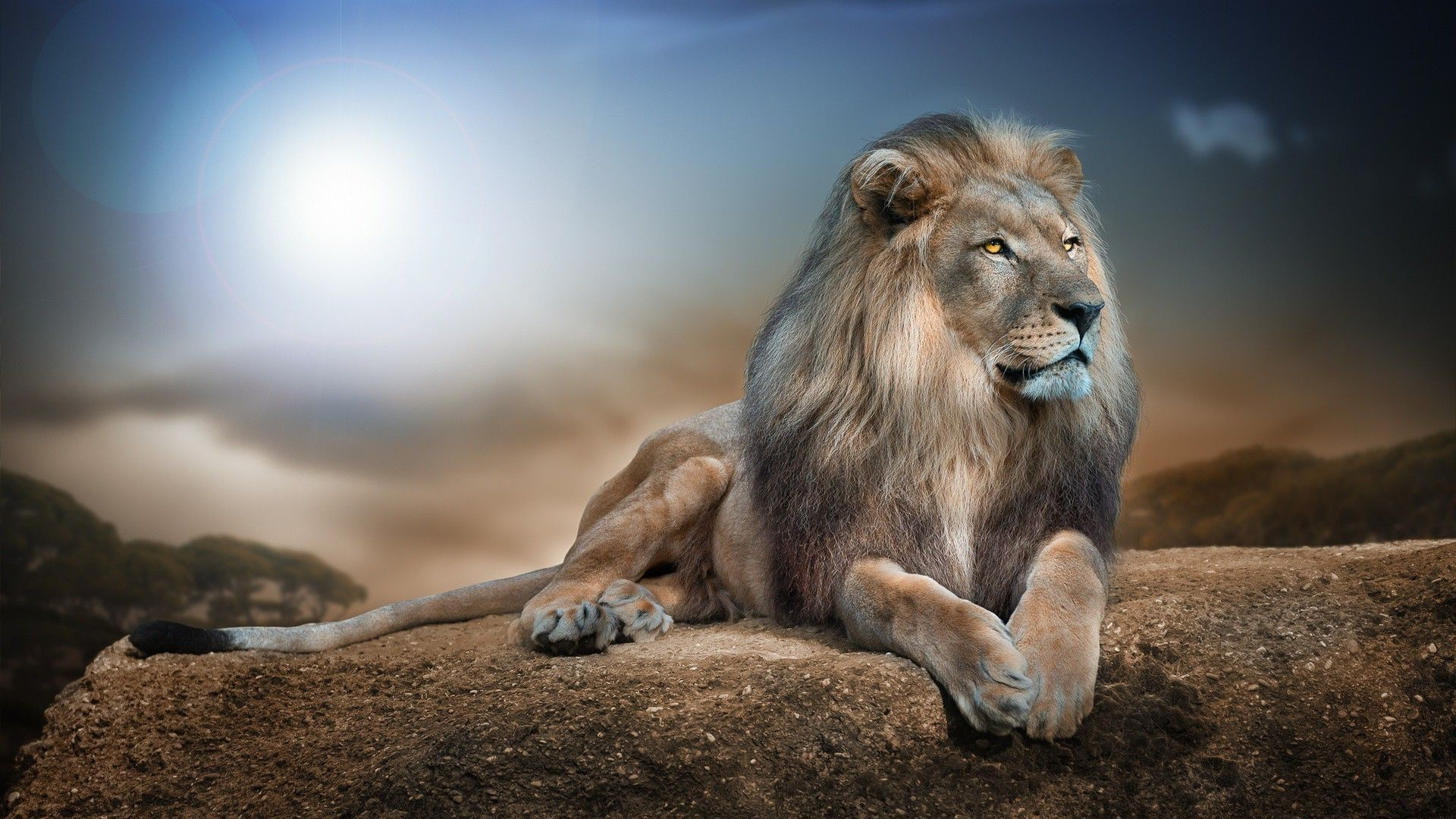 10 Top Wild Animal Wall Paper FULL HD 1080p For PC Desktop
