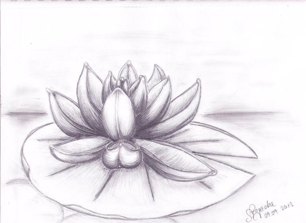 Lilies drawing - Google Search   karakalem   Pinterest   Лилии ...