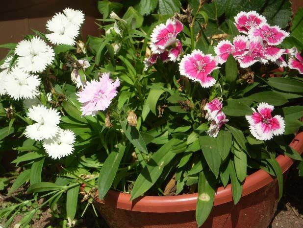 Querido Refúgio - Decoração: Cuidar do Jardim, trabalho que compensa