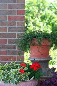 Plants Are Best for Container Gardens in Florida?