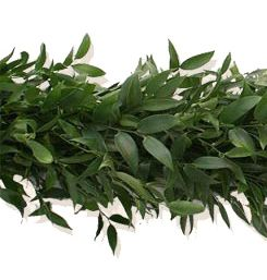 The Italian Ruscus Garland All Of Our Garlands Are Cut Fresh From
