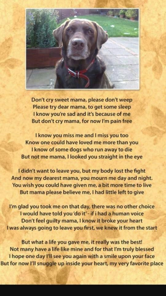 My Sweet Kira Chelsea Dog Poems Dogs Pet Remembrance