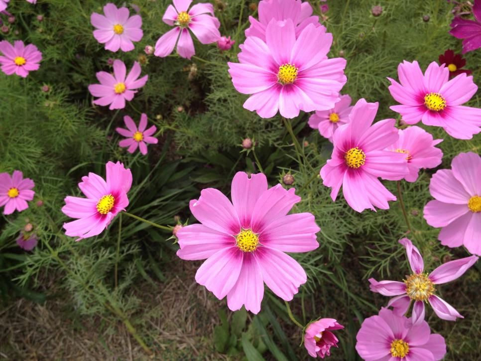 Bee Friendly Garden Flowers And Plants Outdoor Flowering Plants Outdoor Flowers Annual Flowers