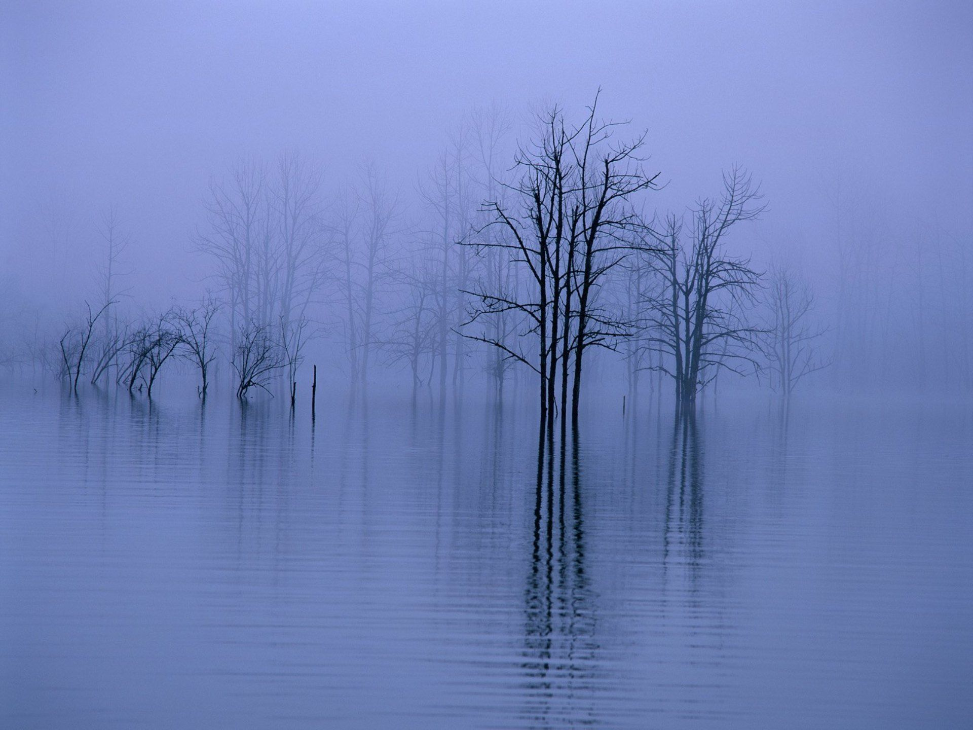 87 Best Mystery Of Fog Images On Pinterest