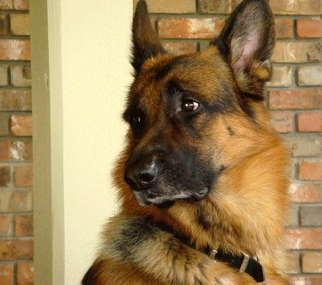 Lars Sitting On Porch In Wales Wisconsin Search Rescue Dogs