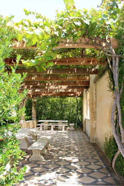 Vine Plants As Shade Cover Creating Shade With Vining