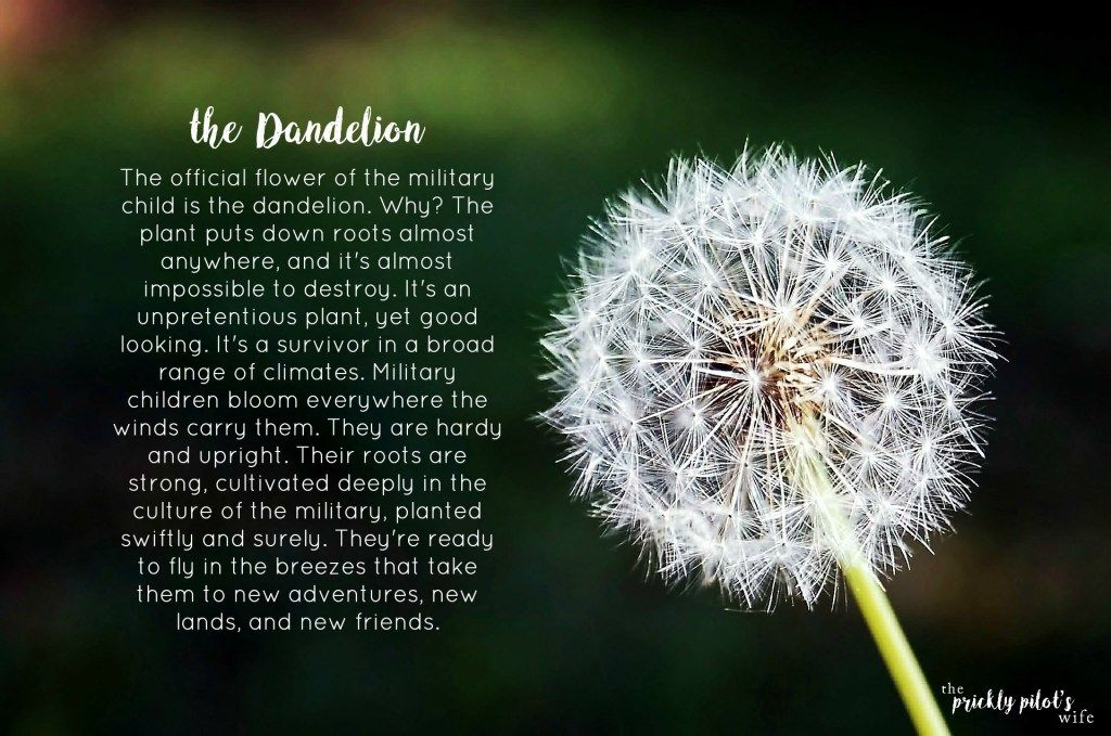 The Dandelion The Official Flower Of The Military Child Military Kids Overcoming Fear Quotes Fear Quotes