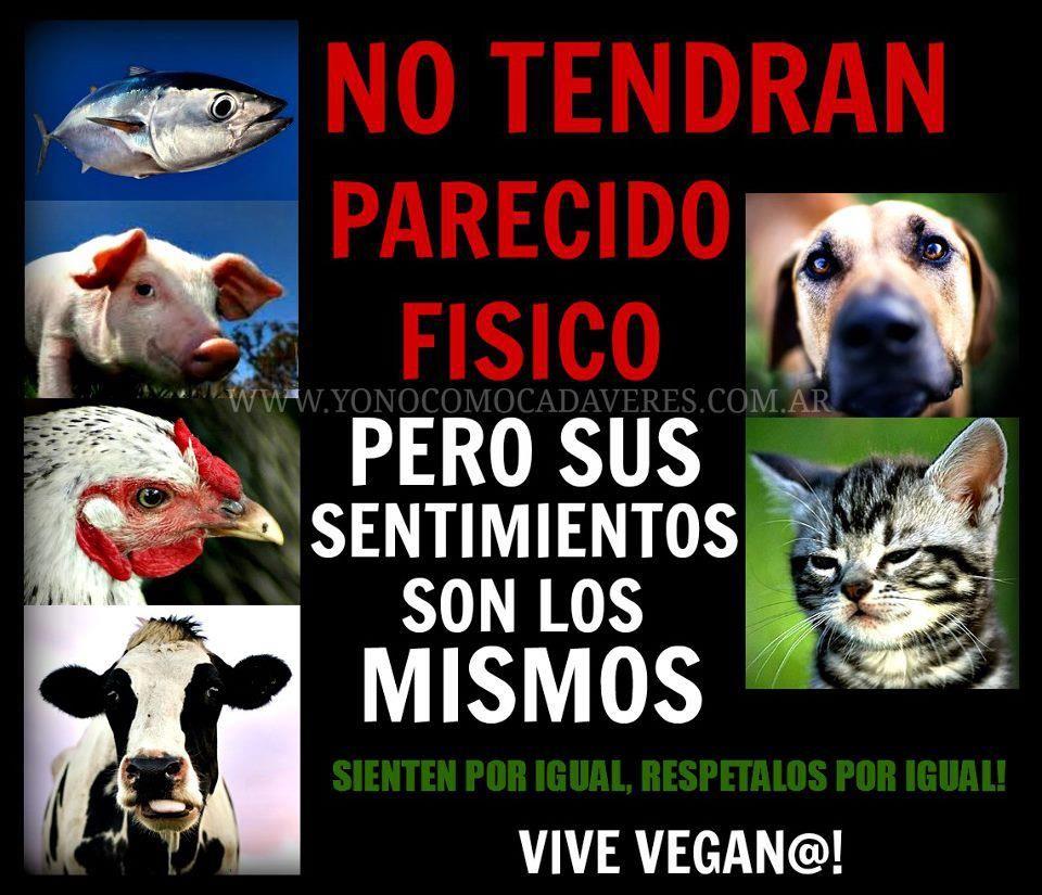 Hay Que Respetar A Todos Los Animales Por Igual No Solo Los Mas Comunes Como El Gato Y El Perro Merecen Respeto Y Cari Why Vegan Animals Beautiful Going Vegan