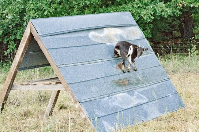 goatvet likes this mobile a frame goat shelter with the raised