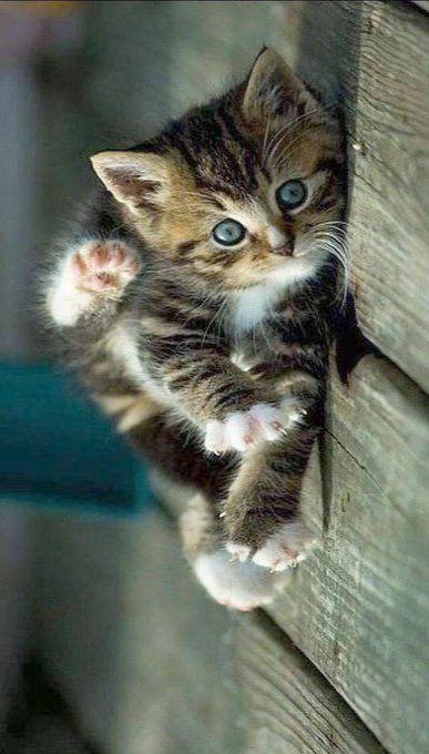 Purry Christmas Kittens Cutest Kittens Cutest Baby Cute Fluffy