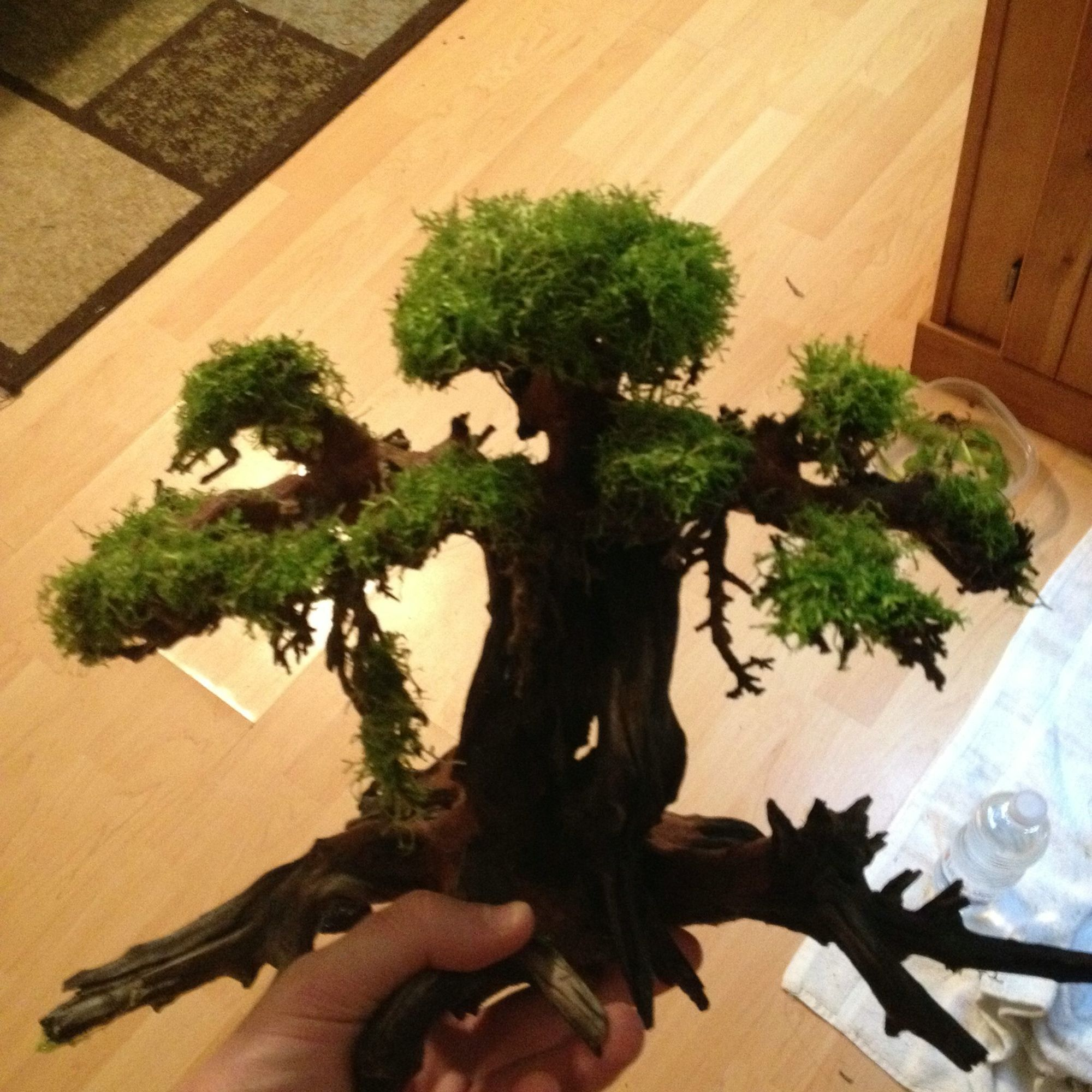 Aquascape Tree: Bonsai Driftwood, Driftwood For Sale