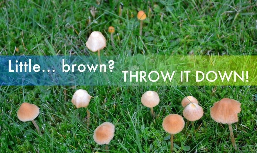 3 Edible Mushrooms That Are Easy To Find And How To Avoid The Poisonous Ones Stuffed Mushrooms Edible Mushrooms Poisonous Mushrooms