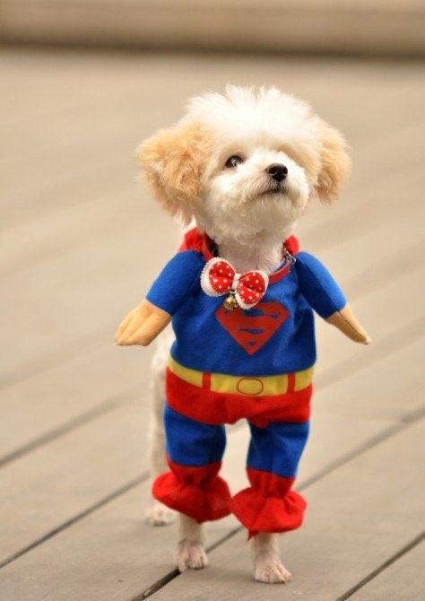 Lovely おしゃれまとめの人気アイデア Pinterest Yamatonadeshiko 犬のコスチューム 可愛すぎる動物 可愛いワンちゃん