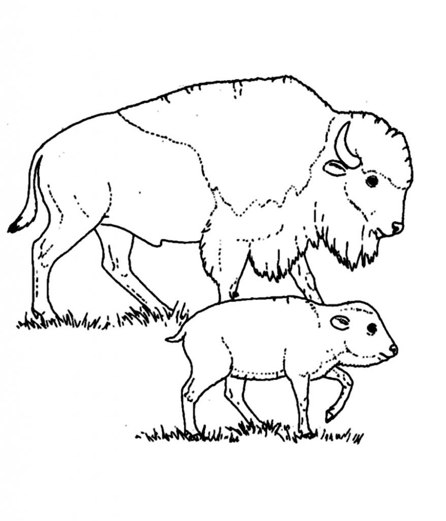 Free Printable Bison Coloring Pages For Kids Com Imagens