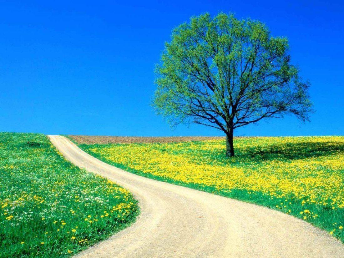 Nature Wallpapers Desktop Free Download Hd