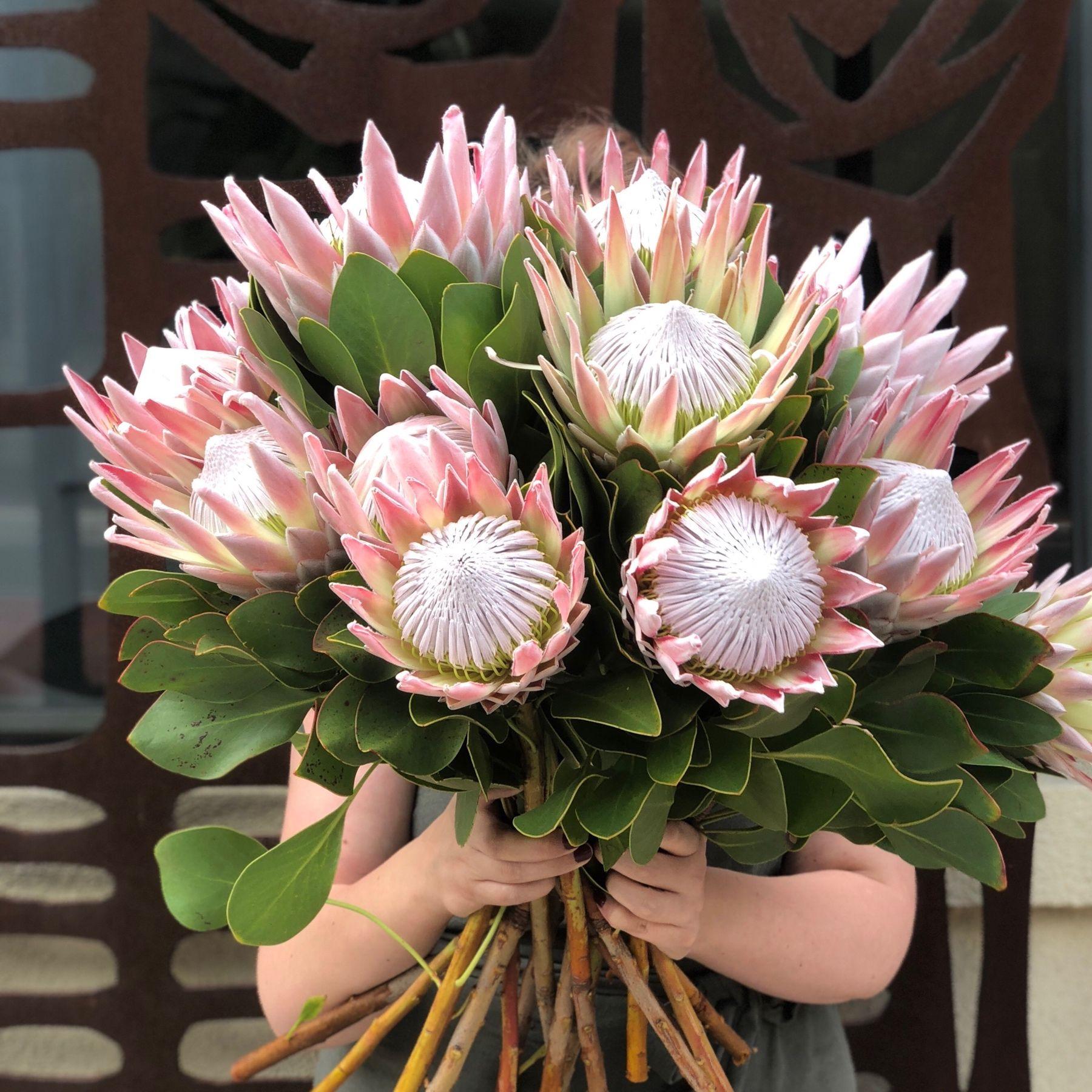 Buy Protea Sylvia 50cm Petaldriven Com South African Flowers African Plants Protea Flower