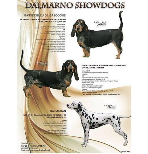 Publication Dans Our Dogs Magazine Dalmarno Showdogs Ir Ch Jolie D An Naoned Pour Dalmarno Ew 16 An Ch 15 16
