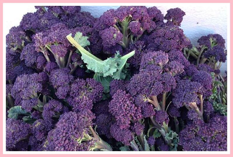 41 Reference Of Purple Sprouting Broccoli Recipes Guardian Broccoli Recipes Broccoli Winter Vegetables