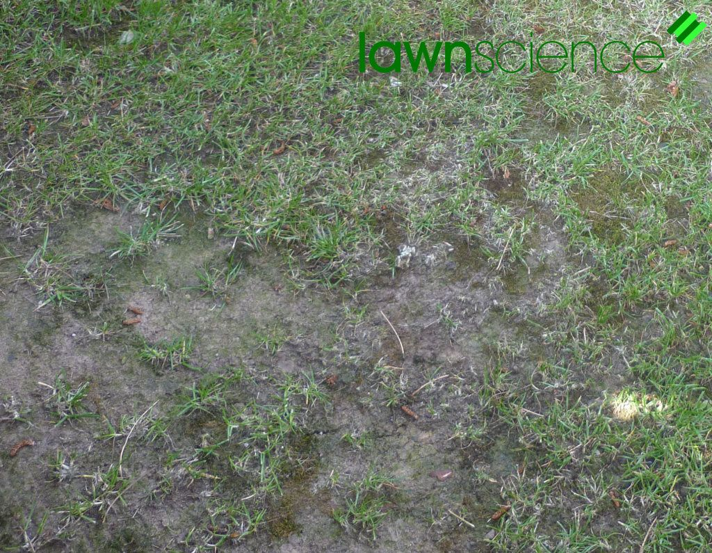 how often to aerate lawn in colorado
