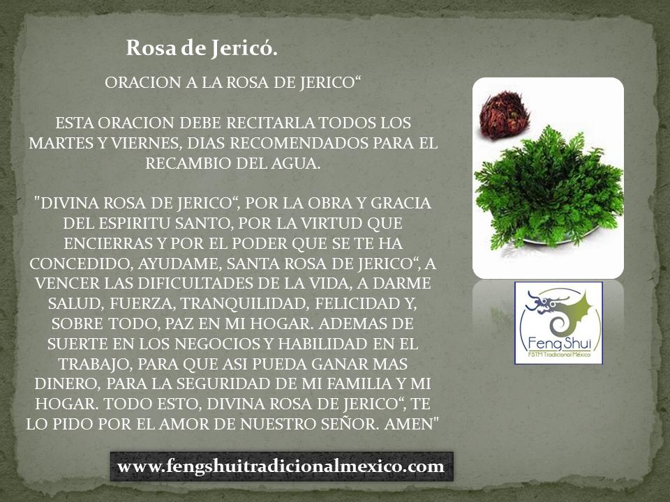 25 Ideas De Rosa De Jerico Jerico La Rosa De Jerico Plantas