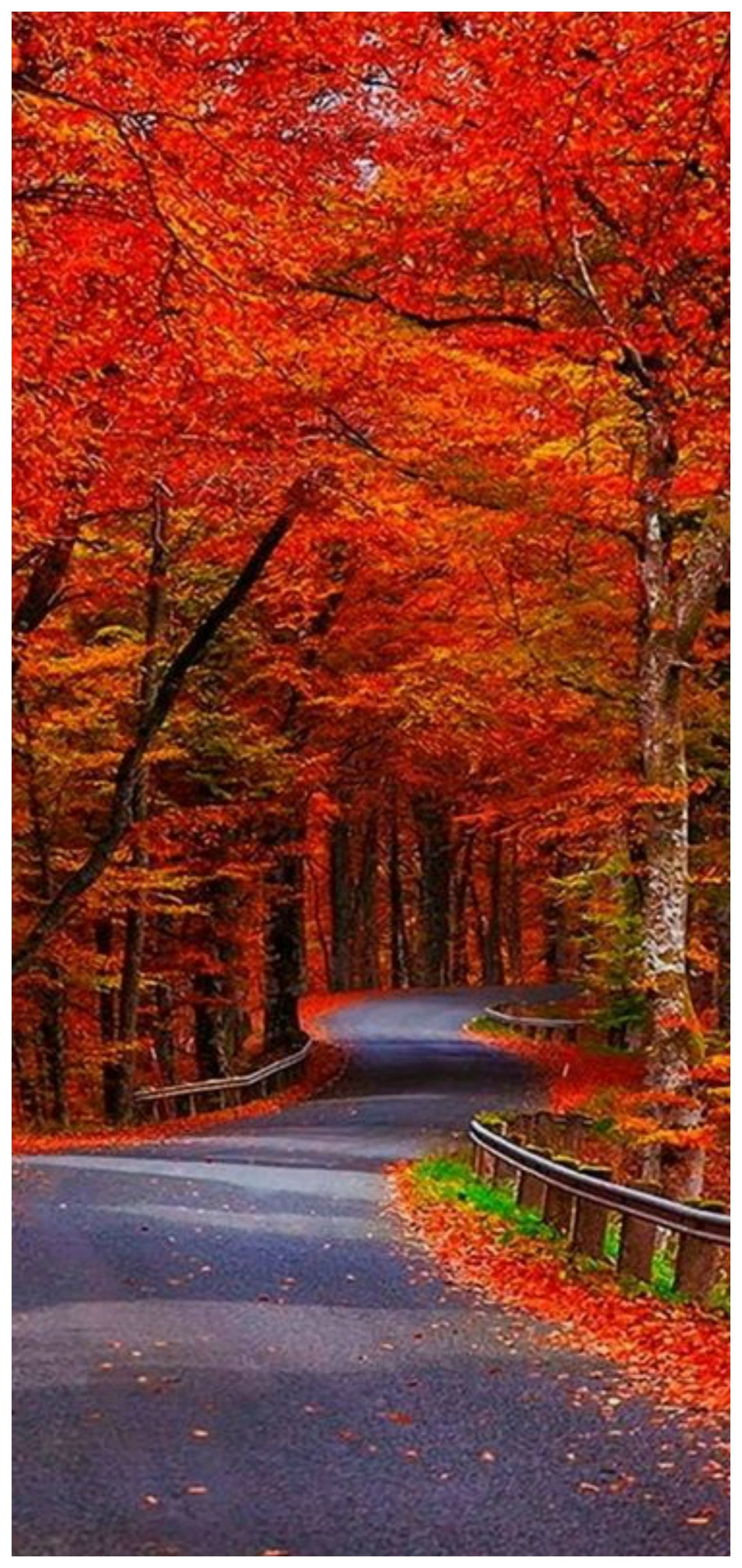 31 Beautiful Autumn Wallpapers Autumn Scenery Fall Pictures Scenery Wallpaper autumn road rays alley trees