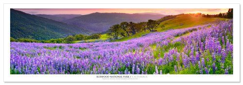 Award Winning Landscape Panoramic Art Print Poster: Redwood National Park for only $17.46 You save: $7.49 (30%)
