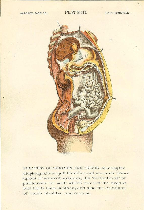 1896 Antique Medical Anatomy Print Female Abdomen Pelvis Stomach