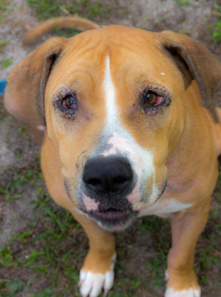 Dolly's Dream Dogs   Jacksonville Humane Society   Dogs for