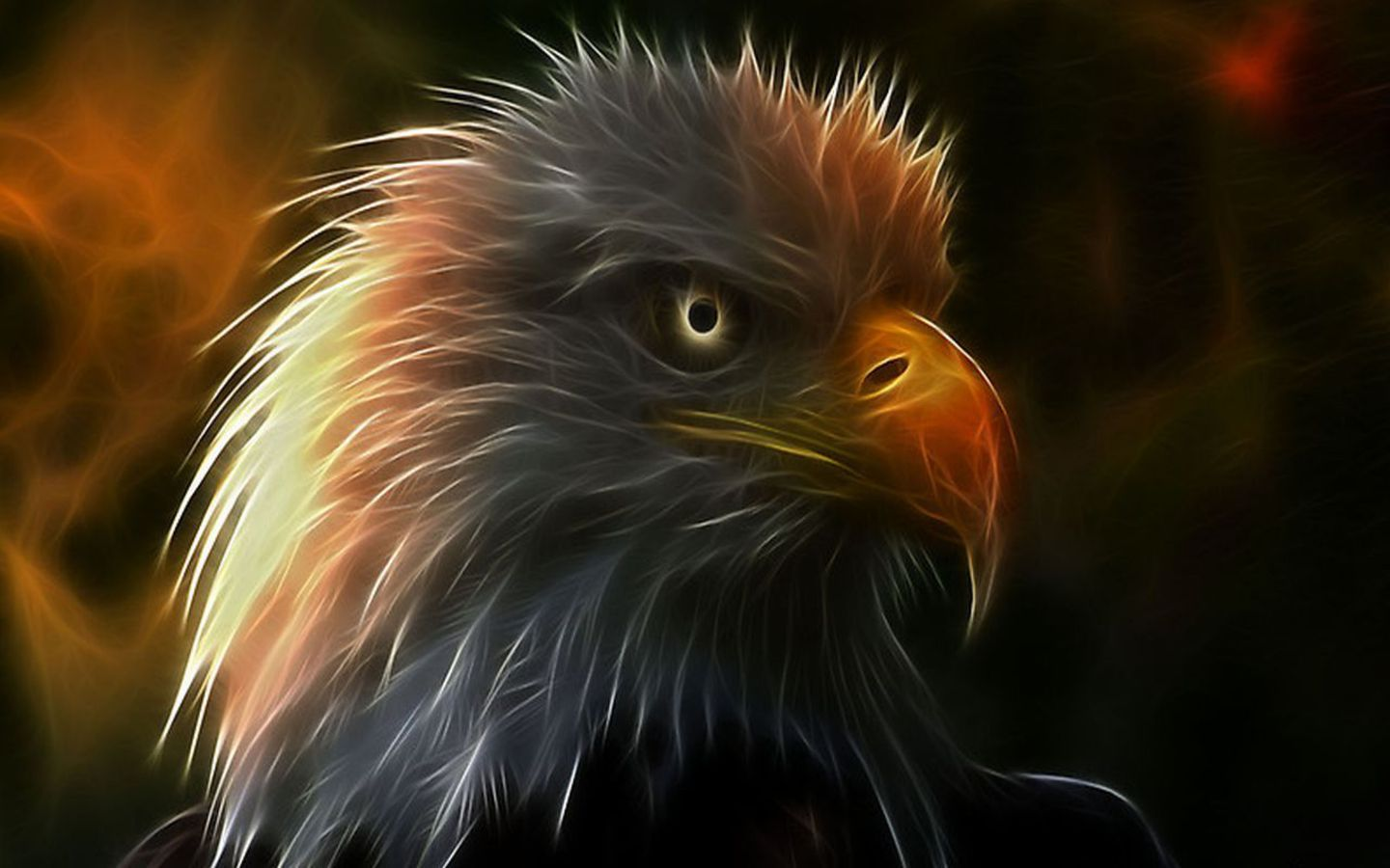 eagles eyes in oictures Fireeagle Wallpaper pictures