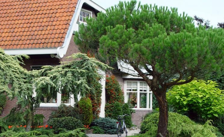 Baume Und Straucher Gartenschmuck Rund Ums Jahr Garten Baume