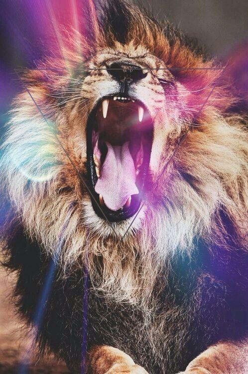 Lion Hipster Wallpaper