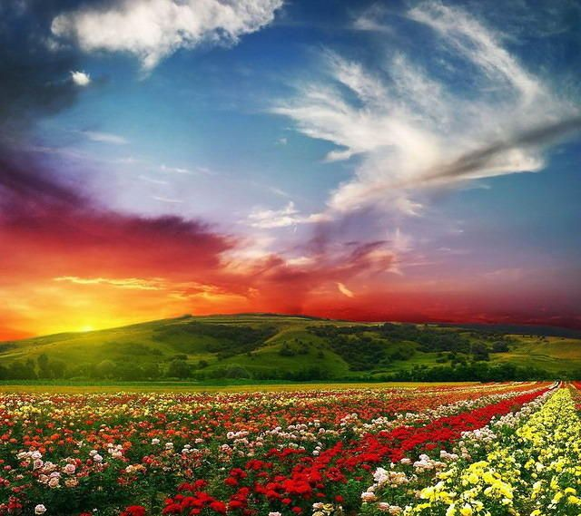 Beautiful Nature Wallpaper For Android: HD Beautiful Scenery Android Phone Wallpapers 960x854 (04
