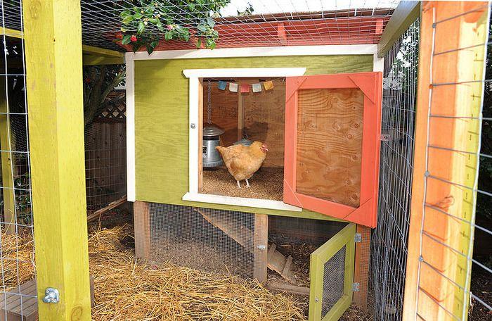 back yard chickens!