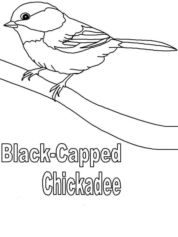 Cute Black Capped Chickadee Coloring Page Bird Coloring Pages Chickadee Chickadee Drawing