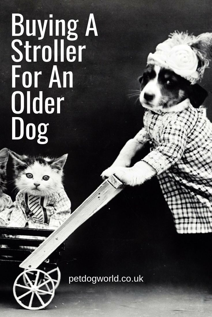 Buying A Stroller For An Older Dog Dog stroller, Dogs of