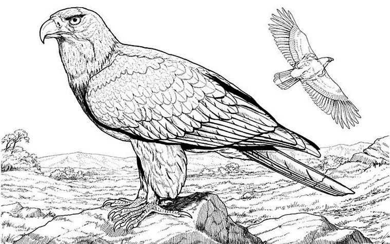 Coloring Pages Birds Realistic. scenic coloring pages  Washington Department of Fish and Wildlife