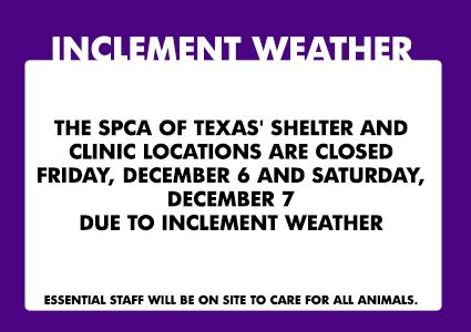 Due to inclement weather, please note that SPCA of Texas clinics and adoption centers are closed tomorrow, December 7th. Please follow @SPCA of Texas on Twitter for updates.