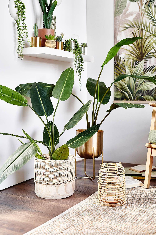 Shop the Look: Stylische Topfpflanzen  DEPOT in 10  Plant