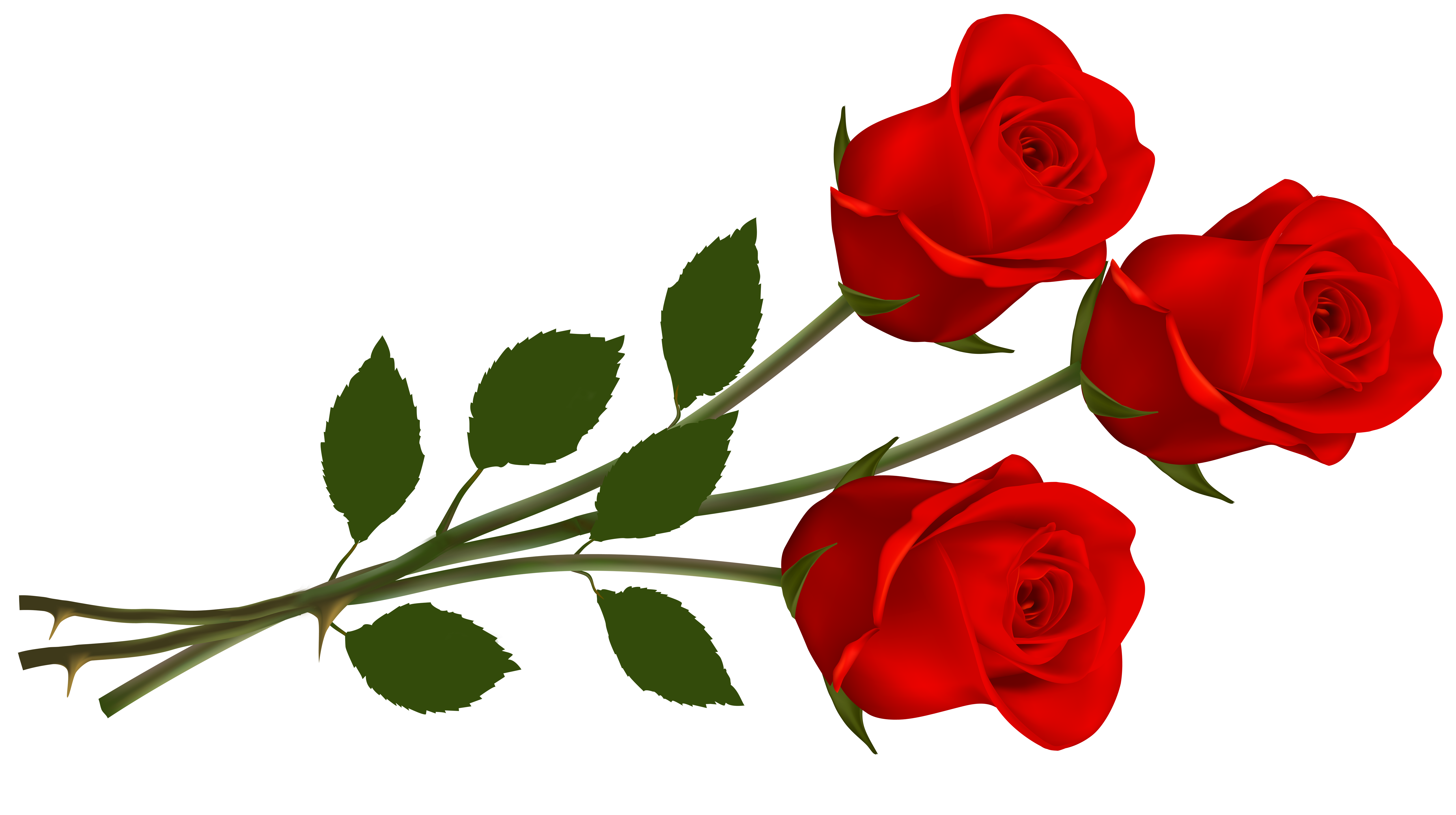 Piq8qkg5t Png 6500 3637 Single Red Rose Rose Clipart Red Roses